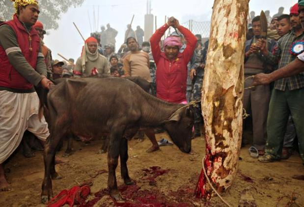 NEPAL-HINDU-RELIGION-FESTIVAL
